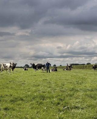 Growing Dairy Farm