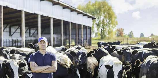 Gerobotiseerde melkkoeling op de boerderij - XL